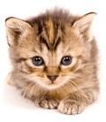 Pro koťata
