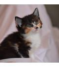 Kočičí azyl Znojemsko